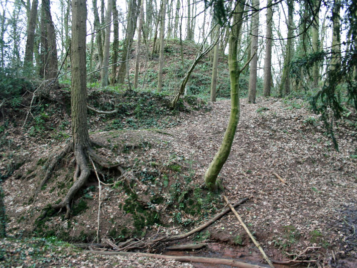 Mill Wood Motte photo Andrew Tivenan